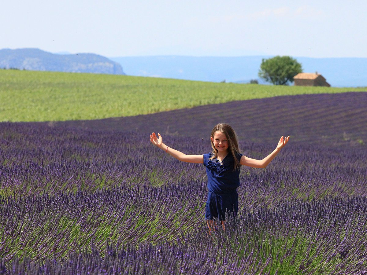 Admire the fragrant lavender fields in Provence.