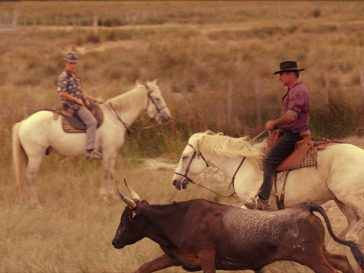 Ride a white horse with a French cowboy (called a gardian) in the Camargue, Europe