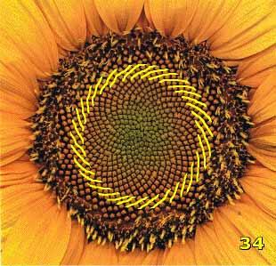 Bí ẩn Tỉ lệ vàng Ф, mật mã tạo thành vũ trụ - Tin180.com (Ảnh 8)