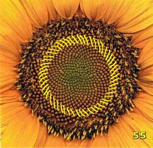 Bí ẩn Tỉ lệ vàng Ф, mật mã tạo thành vũ trụ - Tin180.com (Ảnh 9)