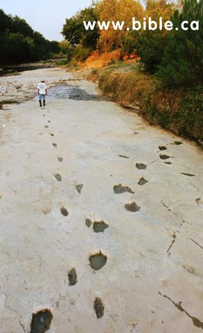 Con người đã xuất hiện từ thời khủng long? Bằng chứng có thể 'đảo lộn' quan niệm ngày nay về lịch sử nhân loại