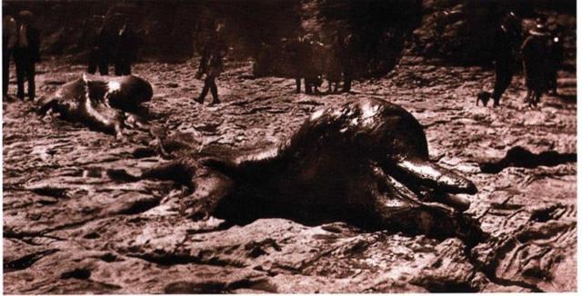 Khủng long chưa tuyệt chủng? Hy hữu xác quái ngư thời cổ đại trôi dạt bờ biển vịnh Monterey