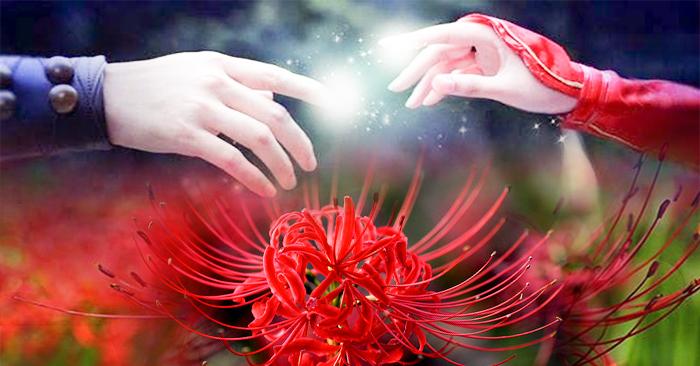 Tình hoa vẫn mãi nở trong lòng nhân thế, chỉ có thể dọn sạch bằng thanh kiếm tuệ